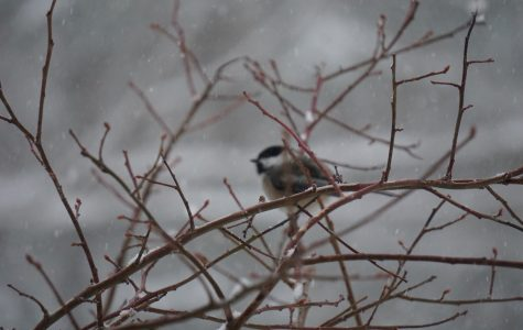 Happy Little Life: Bird Watching