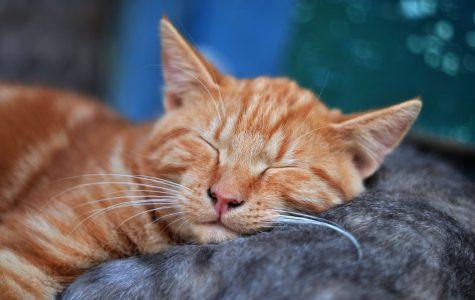 Happy Little Life: Take a nap
