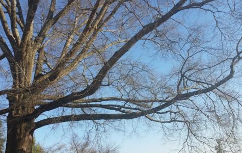 To Climb a Tree