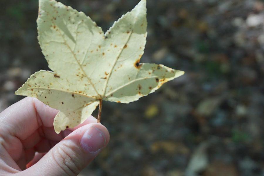 10 ways to celebrate autumn